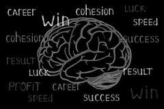 Drawn chalk brain on the black board royalty free illustration