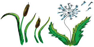 Drawn colored flower and reed. Vector illustration Royalty Free Stock Photos