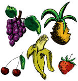 Drawn colored fruits and berries. Vector Stock Images
