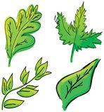 Drawn colored green leaves on white. Vector Stock Photos