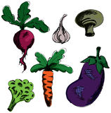 Drawn colored vegetables. Vector illustration Stock Photography