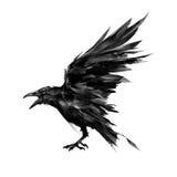 Drawn flying bird raven on white background Stock Photo
