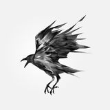 Drawn  flying black crow Royalty Free Stock Image