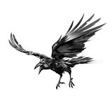Drawn flying crow on white background stock illustration