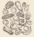 Drawn Fruits And Vegetables Royalty Free Stock Photos