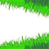The drawn green grass.Vector illustration Stock Image