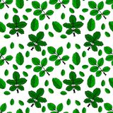 Drawn green rose leaves. Repeating seamless pattern isolated on white background Stock Photos