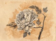 Drawn by hand card, peony flower Royalty Free Stock Photos