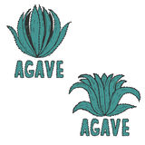 drawn illustration template of agave.Vector Stock Photo
