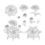 Drawn illustrations floral set stock illustration