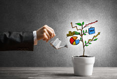 Drawn income tree in white pot for business investment savings and making money royalty free stock photo