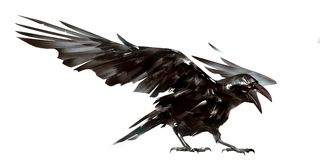 Drawn isolated the bird Raven on the wing Royalty Free Stock Image