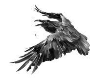 Drawn isolated raven bird in flight monochrome royalty free stock image