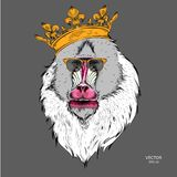 Drawn monkey. Mandrill in a crown. Vector illustration of Ape. Drawn monkey. Mandrill in a crown. A Vector illustration of Ape Royalty Free Stock Photos