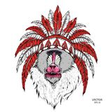 Drawn monkey. Mandrill in a Native American Indian chief. Red and black roach. Indian feather headdress of eagle. Vector illustrat. Ion Royalty Free Stock Photo