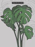 Drawn Monstera Deliciosa tropical windowleaf plant vector illustration
