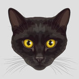 Drawn muzzle of black cat Royalty Free Stock Images
