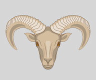 Drawn muzzle of ram with big horns Stock Photography