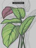 Drawn Pin stripe calathea ornata rainforest tropical prayer plant vector illustration