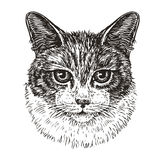 Drawn portrait of cute cat. Animal, kitty, pet sketch. Vintage vector illustration. Isolated on white background Royalty Free Stock Images