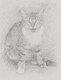 Drawn portrait of a kitten Royalty Free Stock Images