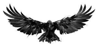 Drawn raven bird in flight on a white background stock image