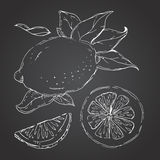 The drawn set of lemons. Lemon segments, juicy lemon. Dark background. Vector illustration Royalty Free Stock Image