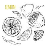 The drawn set of lemons. Lemon segments, juicy lemon. White back Royalty Free Stock Photo