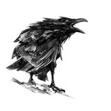 Drawn sitting croaking crows on white background Royalty Free Stock Photography