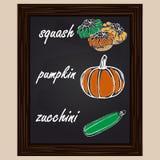Drawn  squash, pumpkin and zuccini Stock Photo