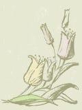 Drawn tulips Stock Photos