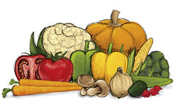 Drawn Vegetables Stock Photography