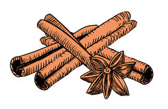 Drawn vintage cinnamon. For drinks and coffe Stock Photo