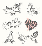 Drawn wedding pigeon love symbol vector sketch Royalty Free Stock Photo