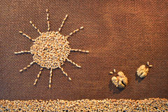 Drawn by wheat grains sun shining over field Stock Photo