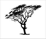 Drawold die bladboomillustratie uitspreiden Stock Foto