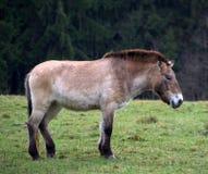 Dray-cavallo fotografie stock