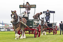 Dray horse teams Stock Photography