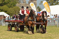 Dray and Horses Royalty Free Stock Photos