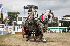 Dray and horses Royalty Free Stock Photo