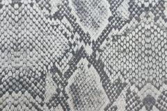 Draybakgrund som göras av hud av en orm eller hud av en reptil, CR royaltyfri bild