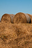 Dreaded hay. On a lawn in early spring Royalty Free Stock Photos