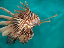 Dreadful fish Stock Photo