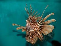 Dreadful fish Stock Photos