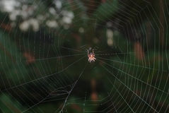 Dreadful spider on his net in dark forest Stock Image