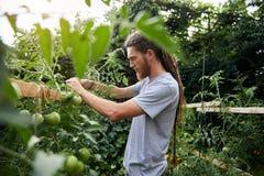 Фермер в саде стоковая фотография rf