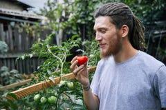 Фермер в саде стоковые фотографии rf