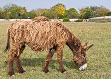Dreadlocks donkey Royalty Free Stock Images