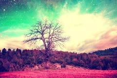 Dream alien oak tree Royalty Free Stock Photography