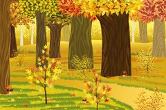 Dream autumn forest. Vector illustration of dream autumn forest Stock Images